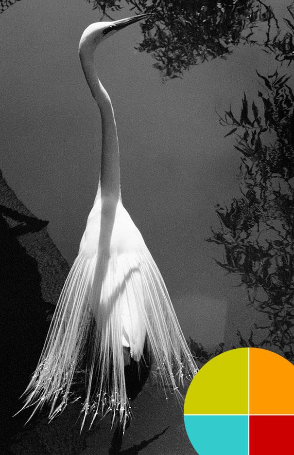 Retracing Audubon: Eco-Conversations with Krista Elrick