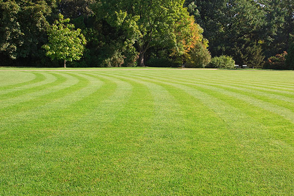 Perfect lawns aren't perfect for the environment, research shows