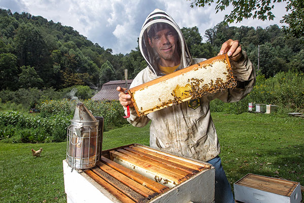 Saving the bees