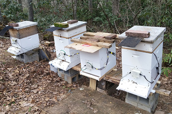 'Bee' part of Appalachian's honeybee monitoring system research