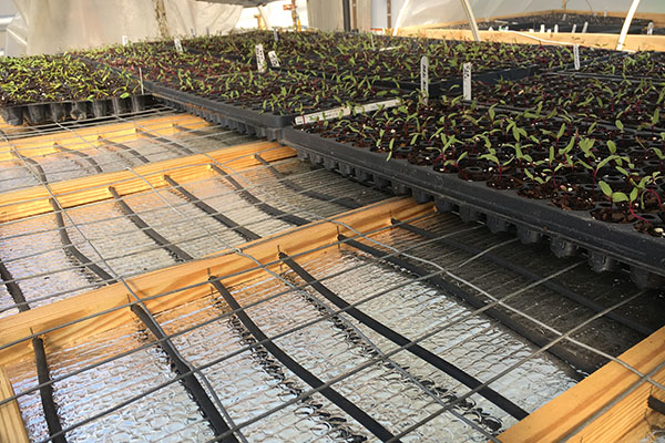 Appalachian's NEXUS research project cuts by half local farm's greenhouse energy consumption
