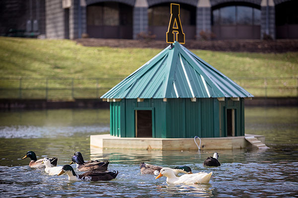 New duck house built for Appalachian's campus flock