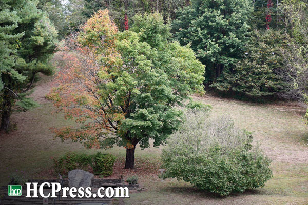 Fall Color Guy Gives Latest Update on Leaf Colors as Drought Continues But Conditions Improve