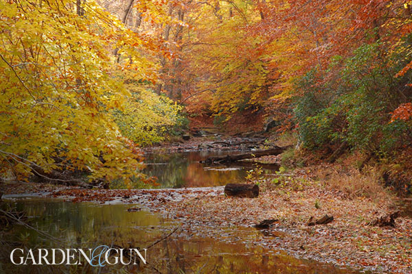 What You Need to Know about Fall Foliage This Year