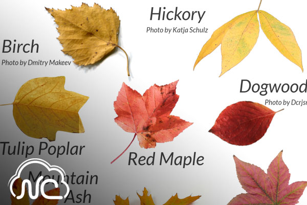 The Leaves, They Are a Changin'... But Why? [faculty quoted]