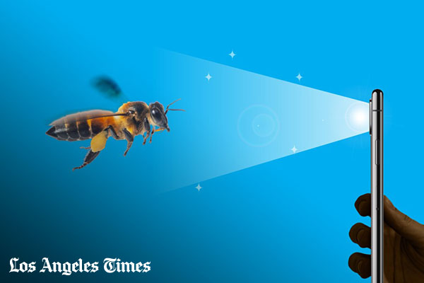 Help save the bees: New app turns users into bee counters [faculty quoted]