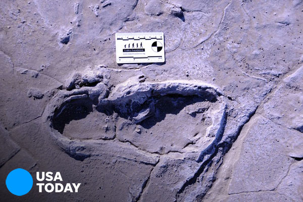 Africa's largest group of human fossil footprints discovered in Tanzania [faculty quoted]