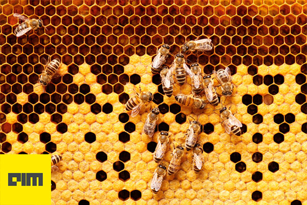 How Big Data Analytics & AI Can Help Boost Bee Populations