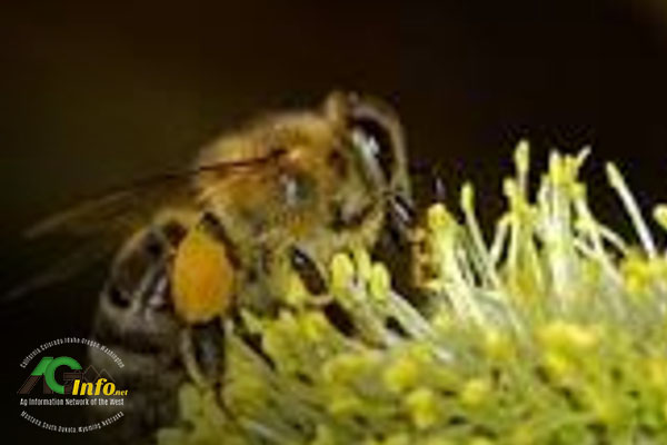 World Bee Day [faculty quoted]